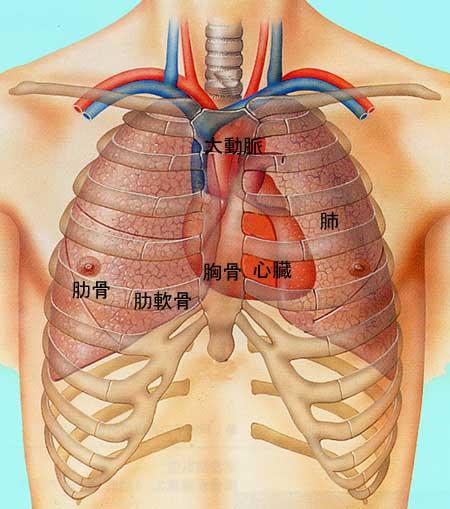 【CT画像あり】心臓の場所を図とともに解説!病気 …