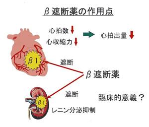 カテコラミン-種類とその作用